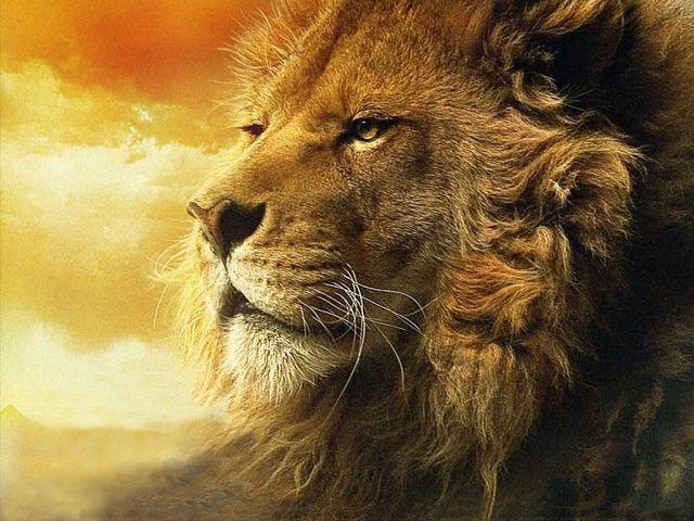 Lion - 640 x 480