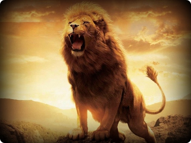 male-lion-roar-wallpaper